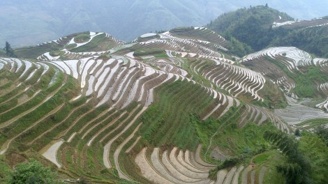 Guilin_Rice fields (28)
