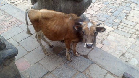 kathmandu (29)
