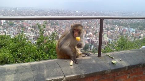 kathmandu (51)
