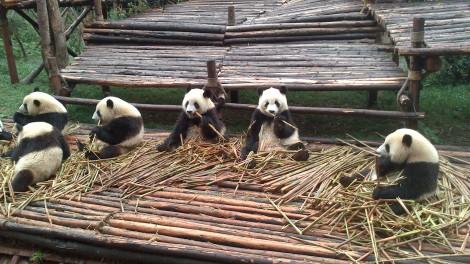 Chengdu (12)