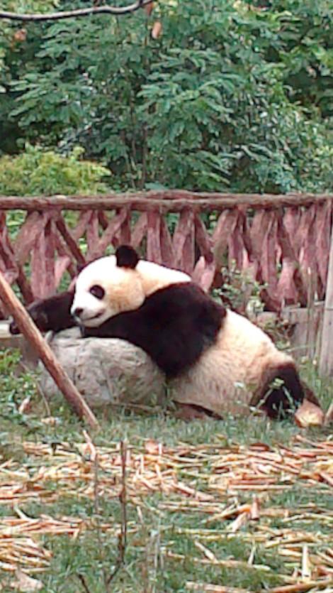 Chengdu (19)
