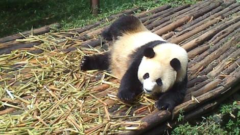 Chengdu (25)