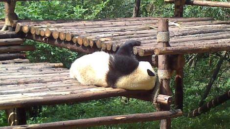 Chengdu (26)