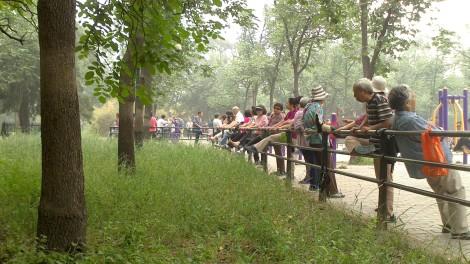Pechino (63)